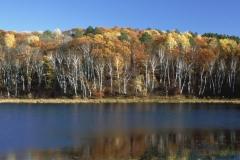 Fall Colors Near Isabella, Minnesota